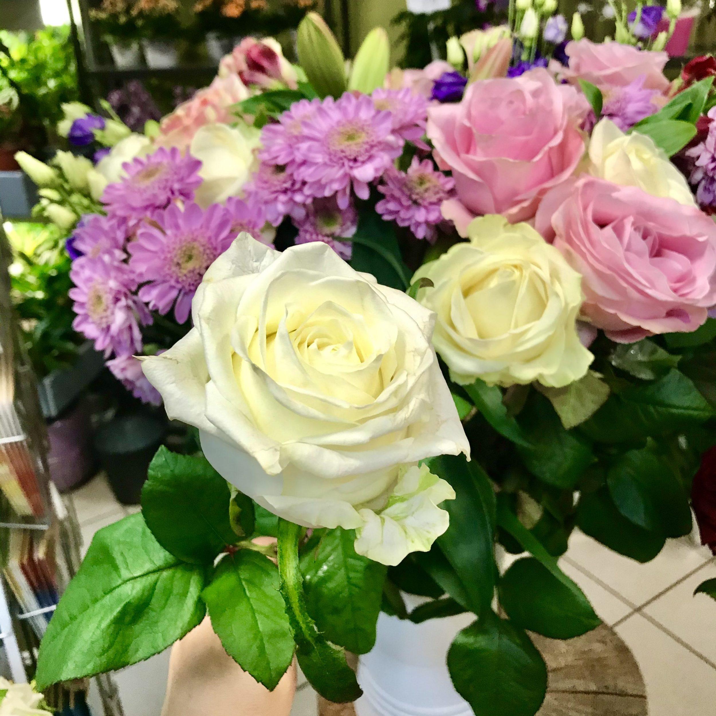 Blumen Holland weiterhin geöffnet :-)